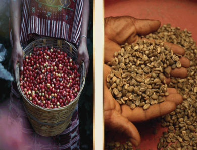 Koffiezetapparaat kopen? Onze gids van 2020